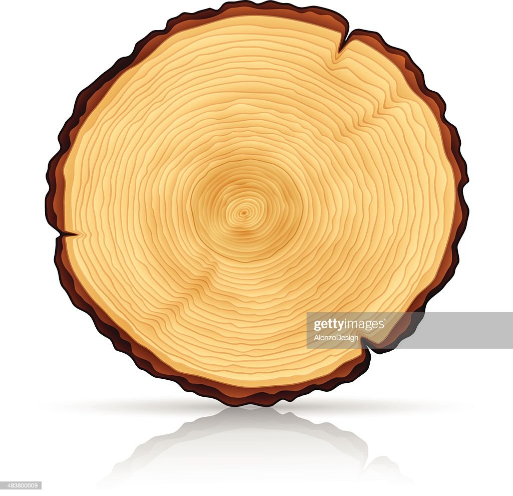 Wooden Cross section : stock illustration