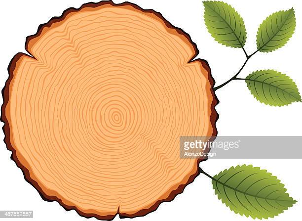 Wooden Cross Section with Leaves