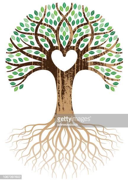 woodgrain herz baum und wurzeln - ast pflanzenbestandteil stock-grafiken, -clipart, -cartoons und -symbole