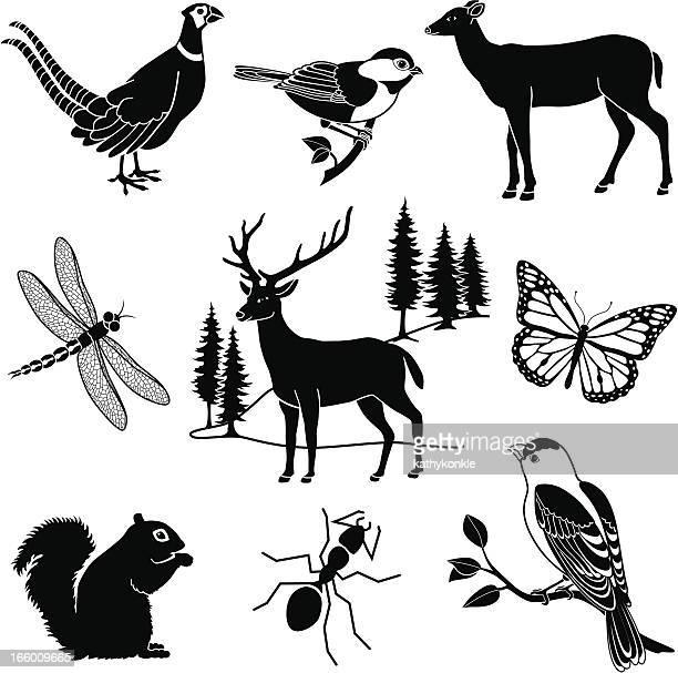 woodland animals - odonata stock illustrations, clip art, cartoons, & icons