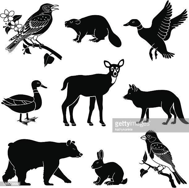 ilustrações de stock, clip art, desenhos animados e ícones de woodland animais - lobo