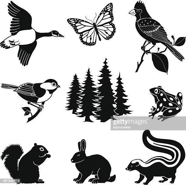 woodland animals - squirrel stock illustrations