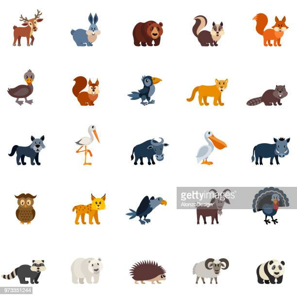 woodland forest animals - lynx stock illustrations, clip art, cartoons, & icons