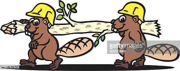 working beaver - driftwood stock illustrations