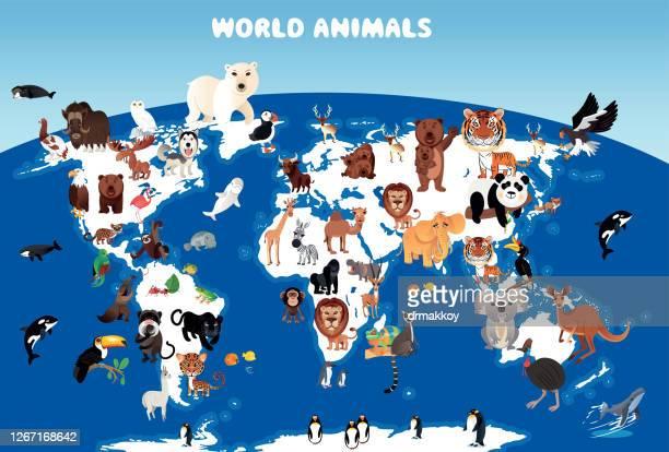 world animals map - anteater stock illustrations