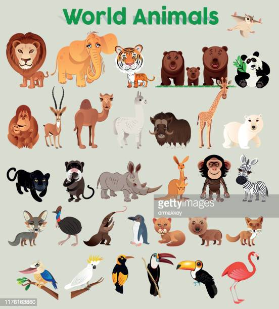 world animals - anteater stock illustrations