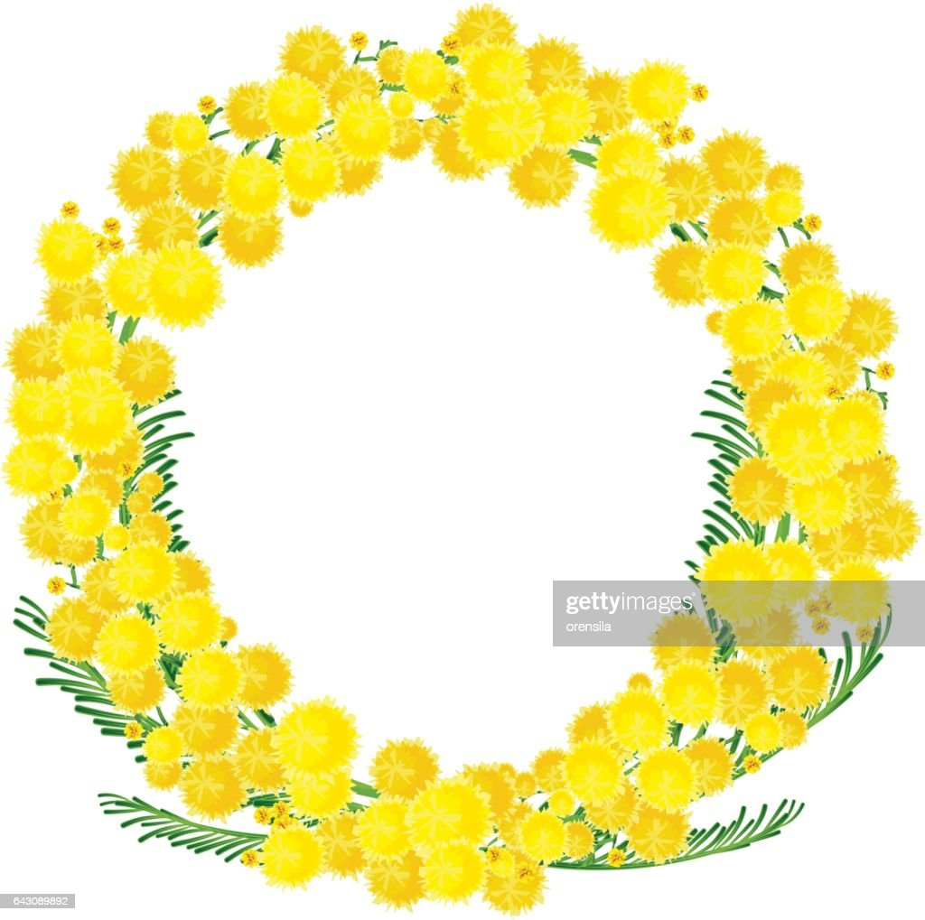 Wreath of yellow acacia flowers twigs