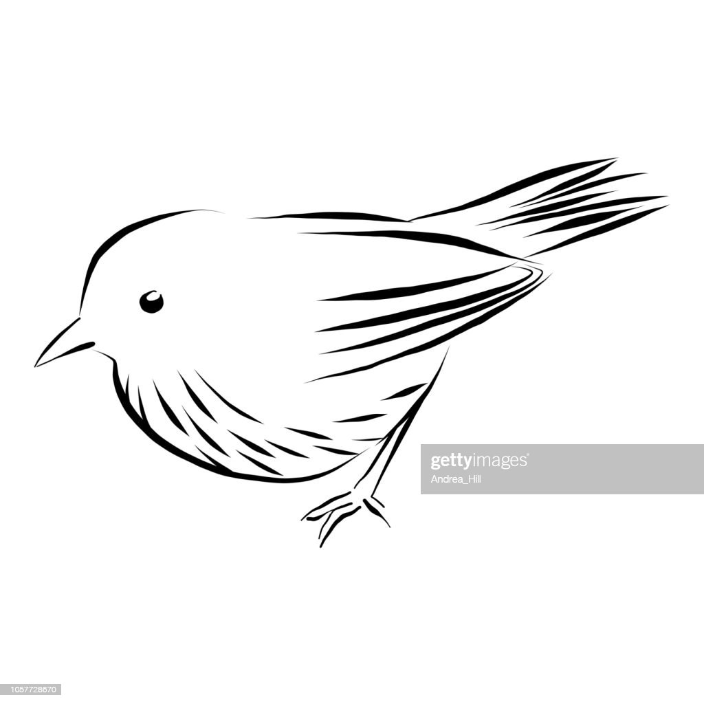 Wren, Sparrow Vector Illustration in Pen and Ink Isolated on White