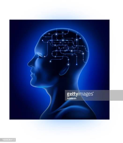 stockillustraties, clipart, cartoons en iconen met x-ray male facial profile - menselijk hoofd