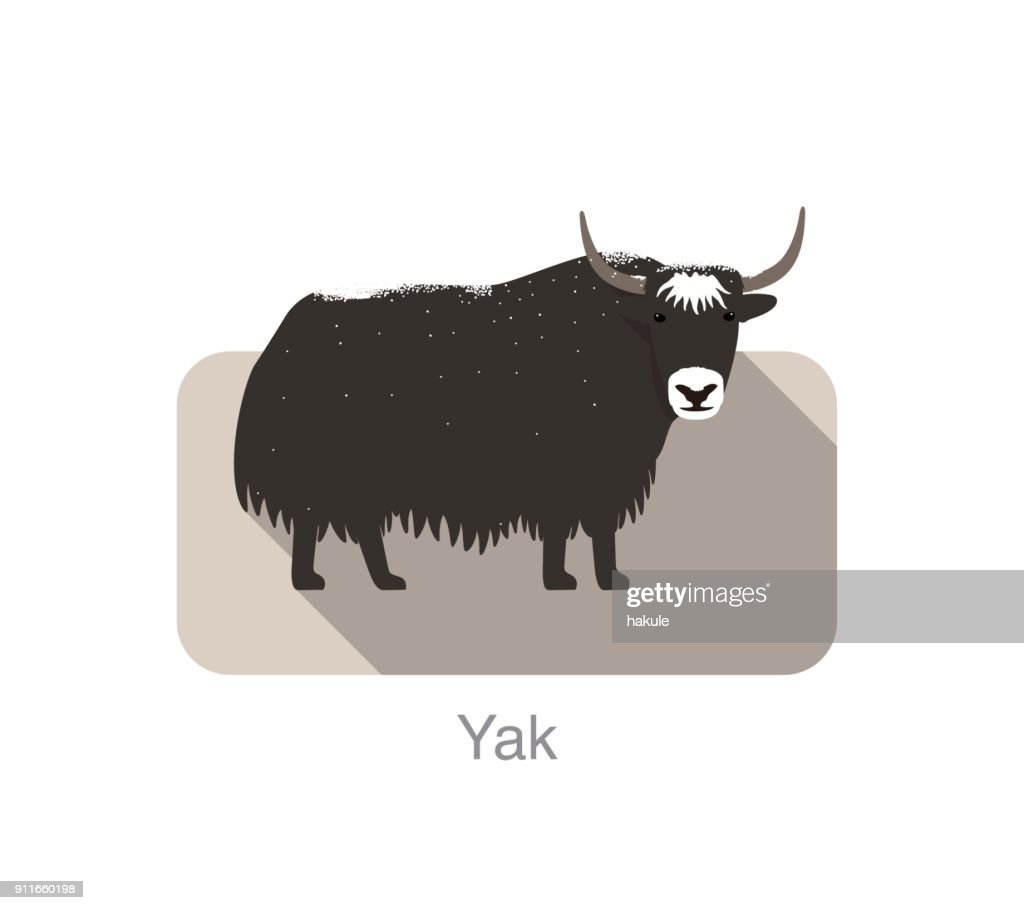 yak standing on the ground, and some snow on its body