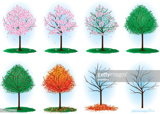 ilustraciones, imágenes clip art, dibujos animados e iconos de stock de año de cerezo - las cuatro estaciones