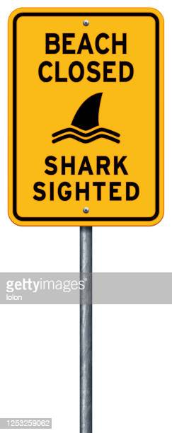 yellow 'beach closed_shark sighted' warning sign with sea - closed sign stock illustrations