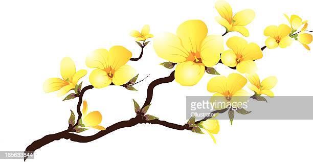 ilustrações, clipart, desenhos animados e ícones de filial abloom amarelo - fragilidade