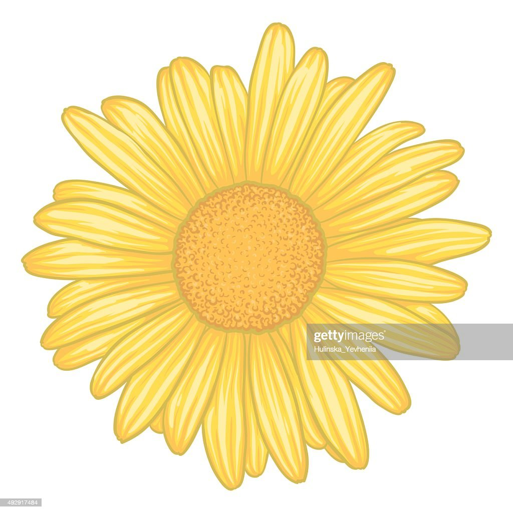 yellow daisy flower with effect watercolor isolated on white
