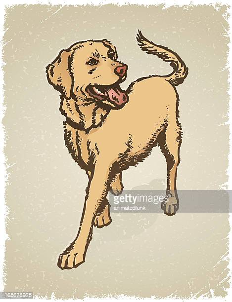 yellow labrador grunge - golden retriever stock illustrations, clip art, cartoons, & icons