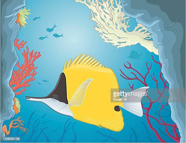 yellow longnose butterflyfish - ranunculus stock illustrations, clip art, cartoons, & icons