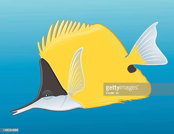 yellow longnose butterflyfish - butterflyfish stock illustrations, clip art, cartoons, & icons
