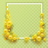 Yellow mimosa on transparent background. Template frame for greeting card