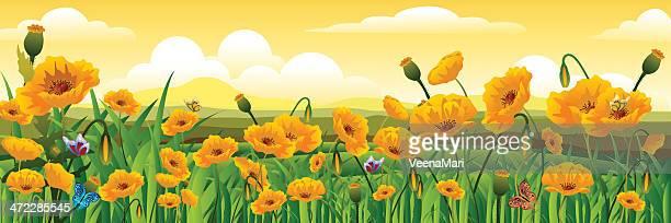 yellow poppy field - poppy plant stock illustrations, clip art, cartoons, & icons