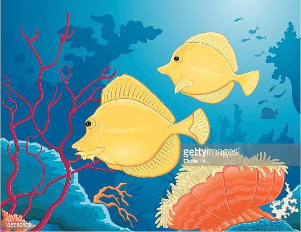 yellow tang poisson chirurgien jaune - acanthuridae stock illustrations, clip art, cartoons, & icons