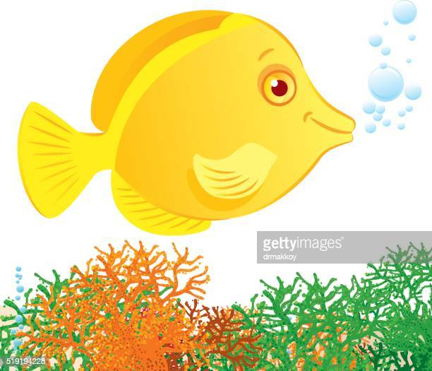 yellow tang - acanthuridae stock illustrations, clip art, cartoons, & icons