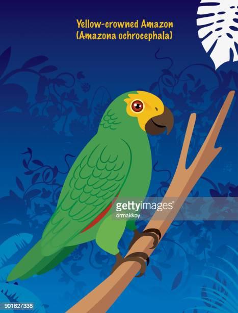 Yellow-crowned Amazon (Amazona ochrocephala)