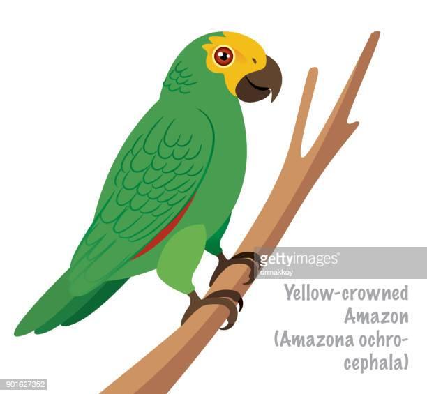 yellow-crowned amazon (amazona ochrocephala) - parrot stock illustrations, clip art, cartoons, & icons