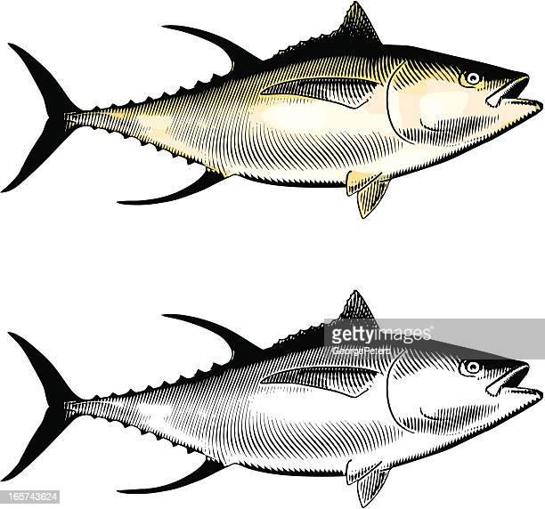 ilustraciones, imágenes clip art, dibujos animados e iconos de stock de atún de aleta amarilla - bonito del norte