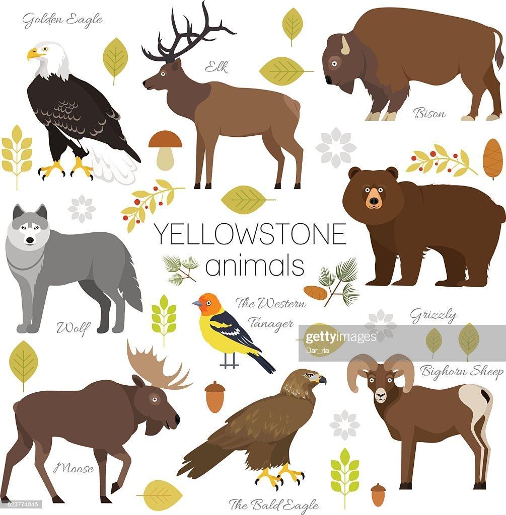 Yellowstone Park animals set moose, elk, bear, wolf, eagle, bison