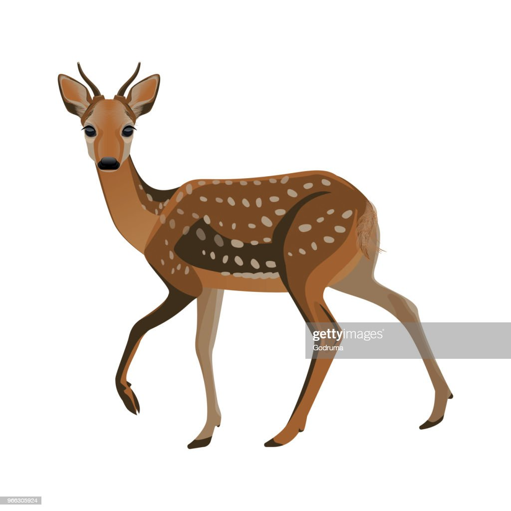 Younf deer with short horns and brown fluffy fur