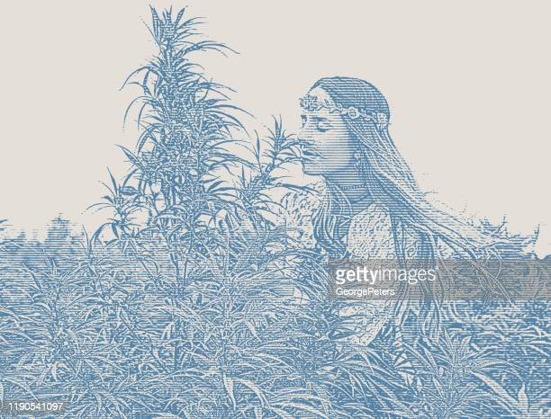 young boho woman farmer examining hemp plants - marijuana leaf stock illustrations
