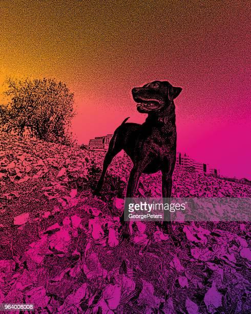ein junger chocolate labrador retriever im freien genießen - farbsättigung stock-grafiken, -clipart, -cartoons und -symbole