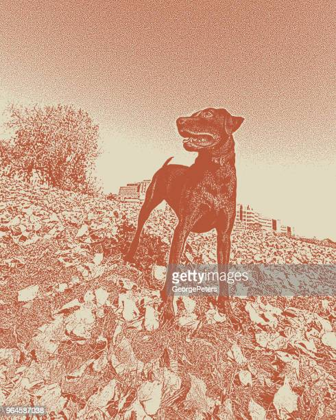 a young chocolate labrador retriever enjoying the outdoors - desaturated stock illustrations, clip art, cartoons, & icons