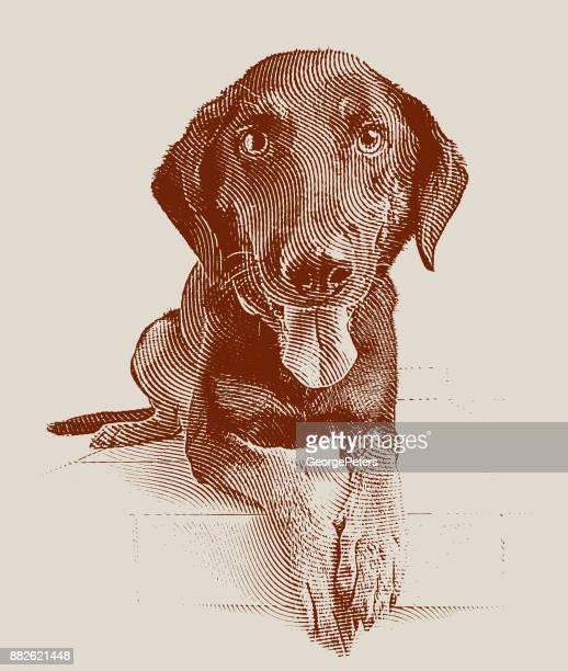 Een jonge Duitse herder mix hond te wachten om te worden vastgesteld