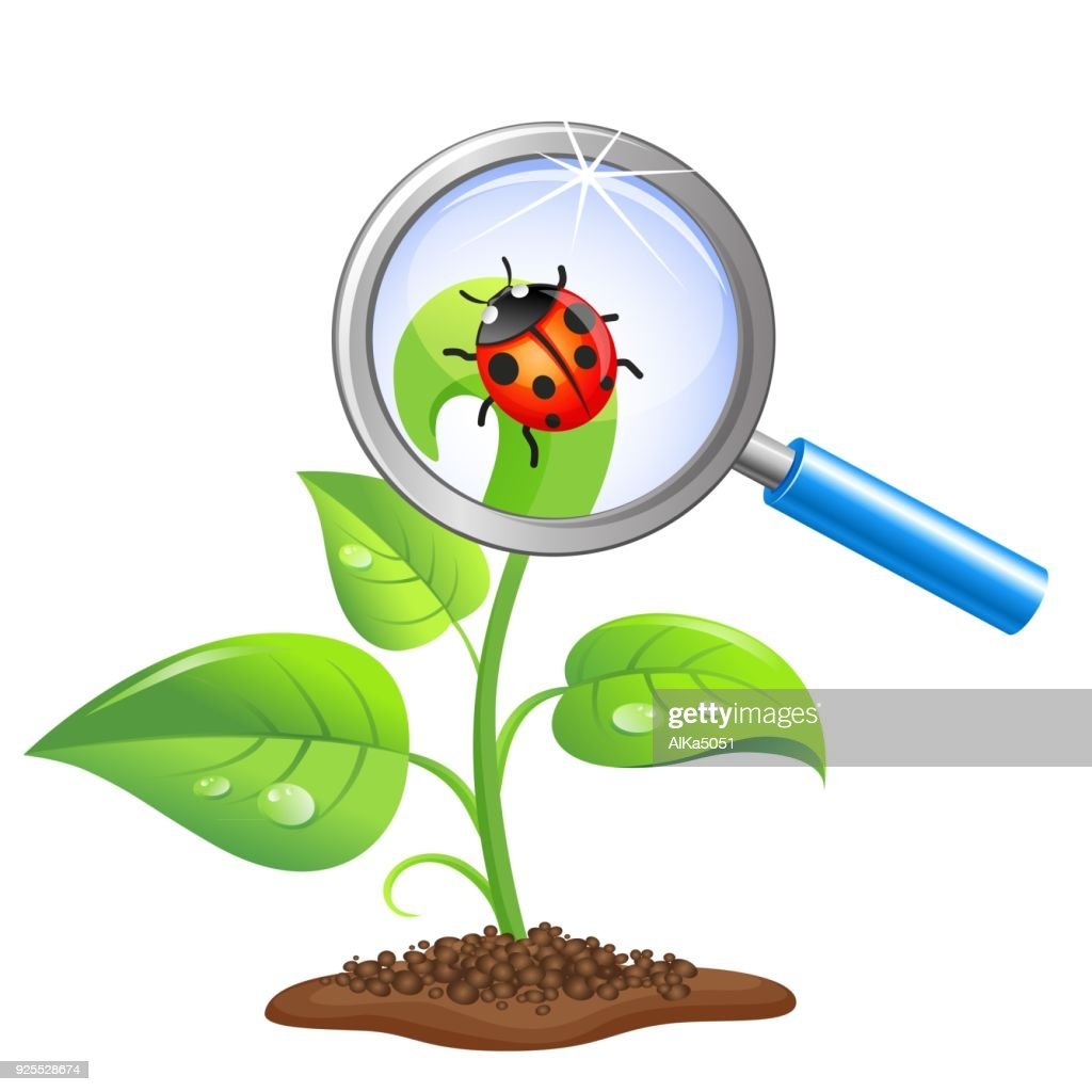 Young green sprout with ladybug and magnifier isolated on white background