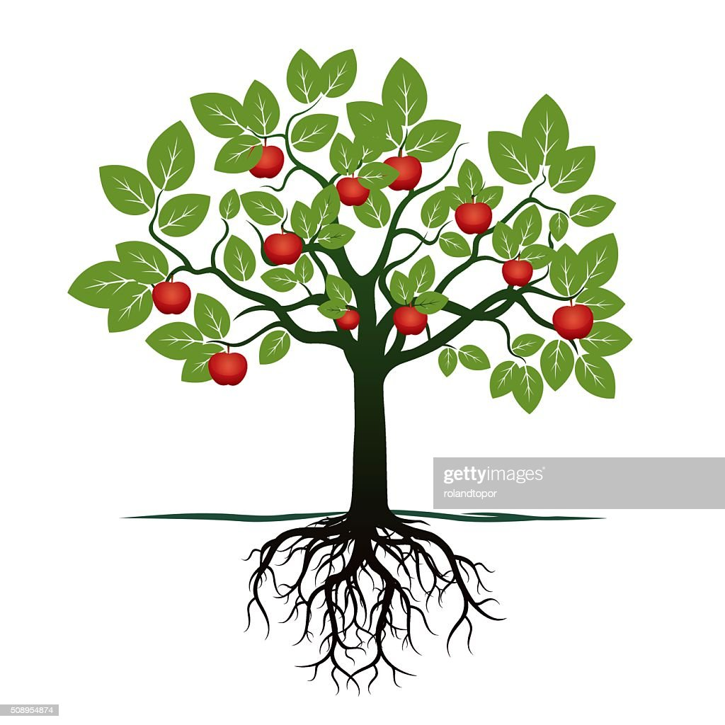 Young Green Tree, Roots and Red Apples. Vector Illustration.