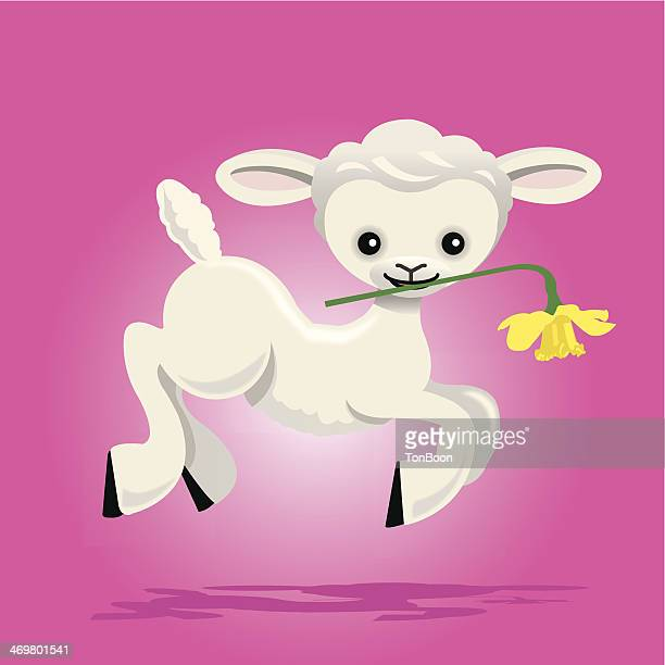 young lamb - paperwhite narcissus stock illustrations, clip art, cartoons, & icons