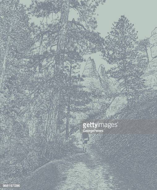 young man hiking in bryce canyon national park. peekaboo loop trail. - ponderosa pine tree stock illustrations, clip art, cartoons, & icons
