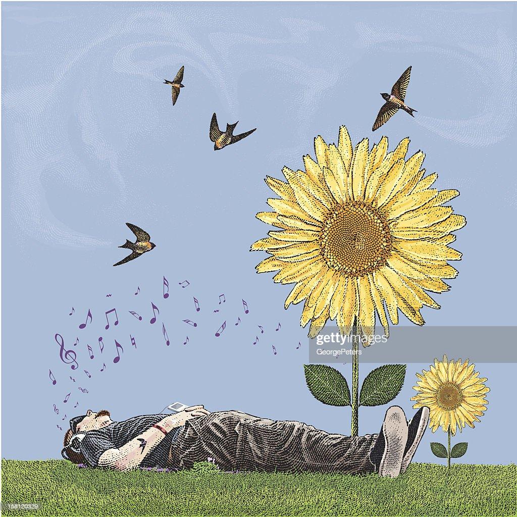 Young Man Lying en la hierba escuchando música cerca Sunflowers : Arte vectorial