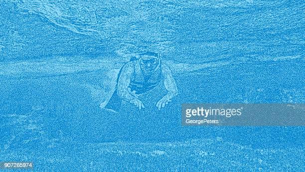 illustrazioni stock, clip art, cartoni animati e icone di tendenza di giovane che fai snorkeling su una barriera corallina nei caraibi. - vertebrato