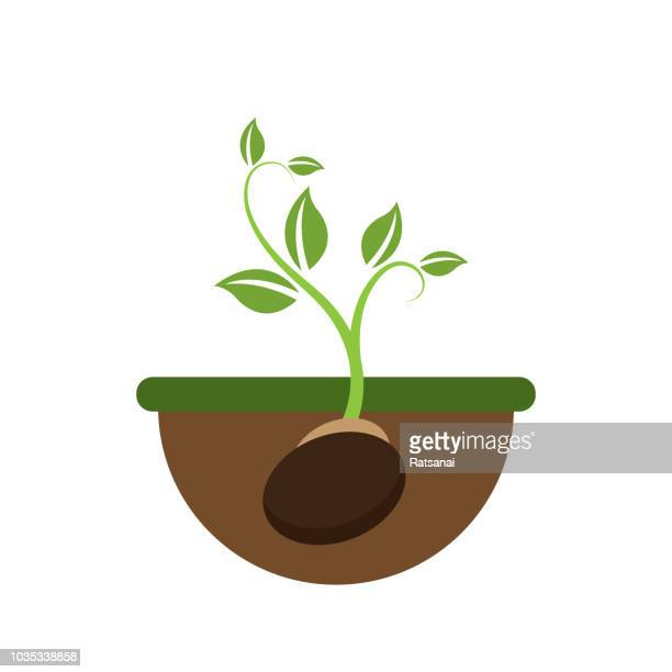 young plant - plant stem stock illustrations, clip art, cartoons, & icons