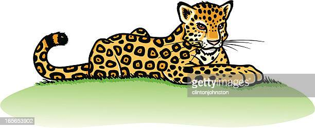 ilustraciones, imágenes clip art, dibujos animados e iconos de stock de joven relajante moteado jaguar - jaguar