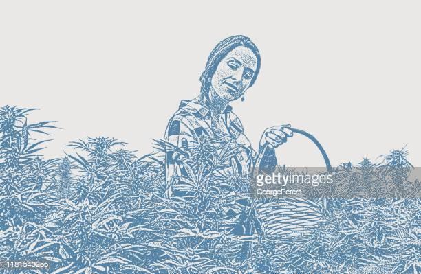 ilustrações, clipart, desenhos animados e ícones de fazendeiro da mulher nova que colhe plantas do cânhamo - intoxicação por cannabis