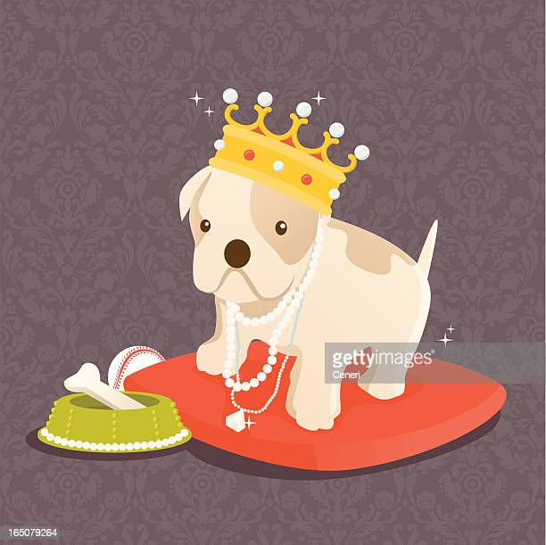 your highness: our pampered pets - pampered pets stock illustrations