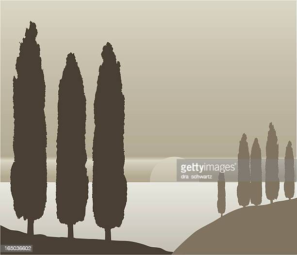 сypress trees silhouettes, vector - cypress tree stock illustrations