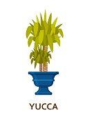 yucca decorative houseplant in pot. Florist indoor tree or interior flowerpot. Vector illustration