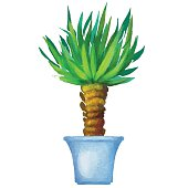 Yucca, watercolor houseplant in flower pot