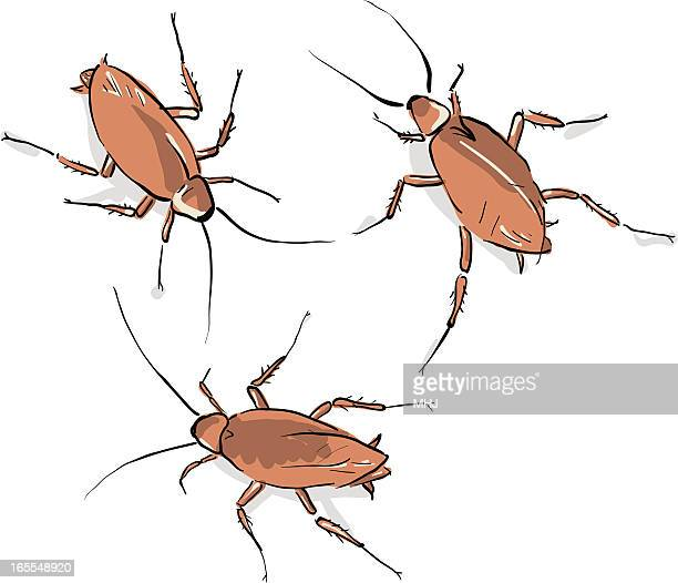 ilustraciones, imágenes clip art, dibujos animados e iconos de stock de yuk, tres cockroaches - cucarachas