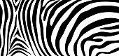 Zebra pattern texture repeating. Simple pattern, black line for textile design fabric.