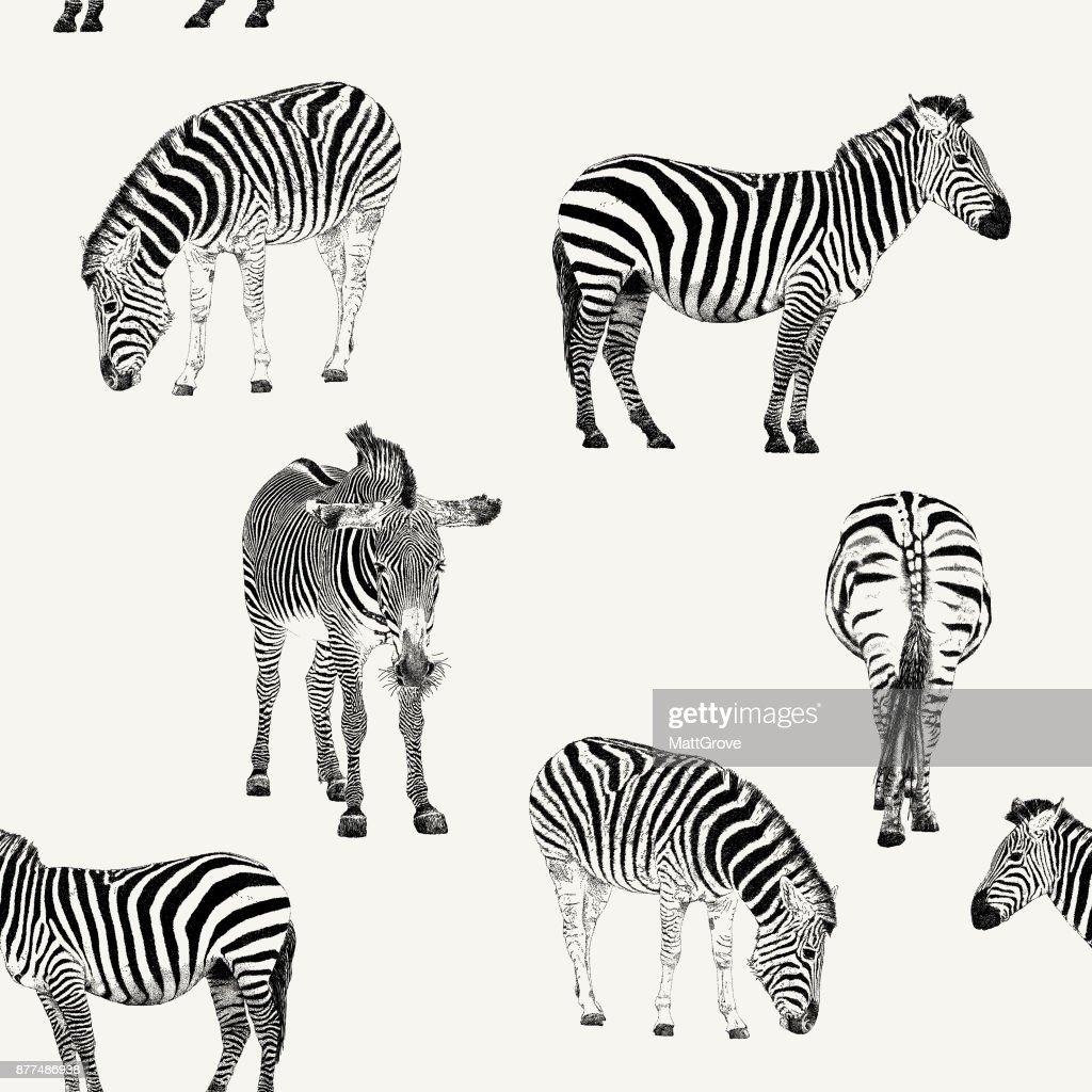 Zebra Repeat Pattern